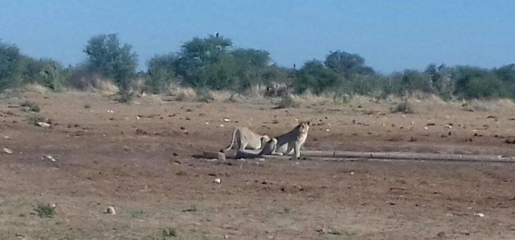 Beautiful animal sightings at Etosha Pan